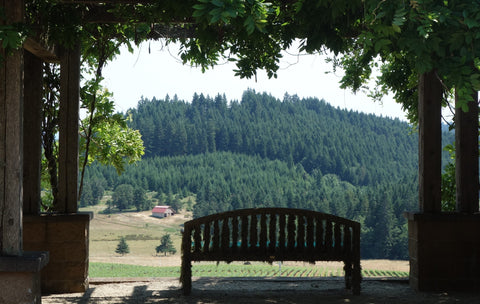 Summer at Iris Vineyards