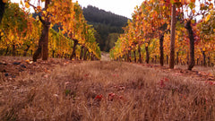 Fall Foliage at Iris Vineyards