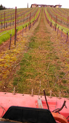Willamette Valley Pinot Noir Vines