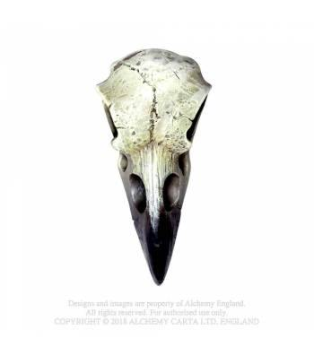 Domestic Platypus-Skull-[meta description]