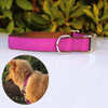 Personalised Pet Collar - Metal Buckle, Nylon and Coloured Ribbon