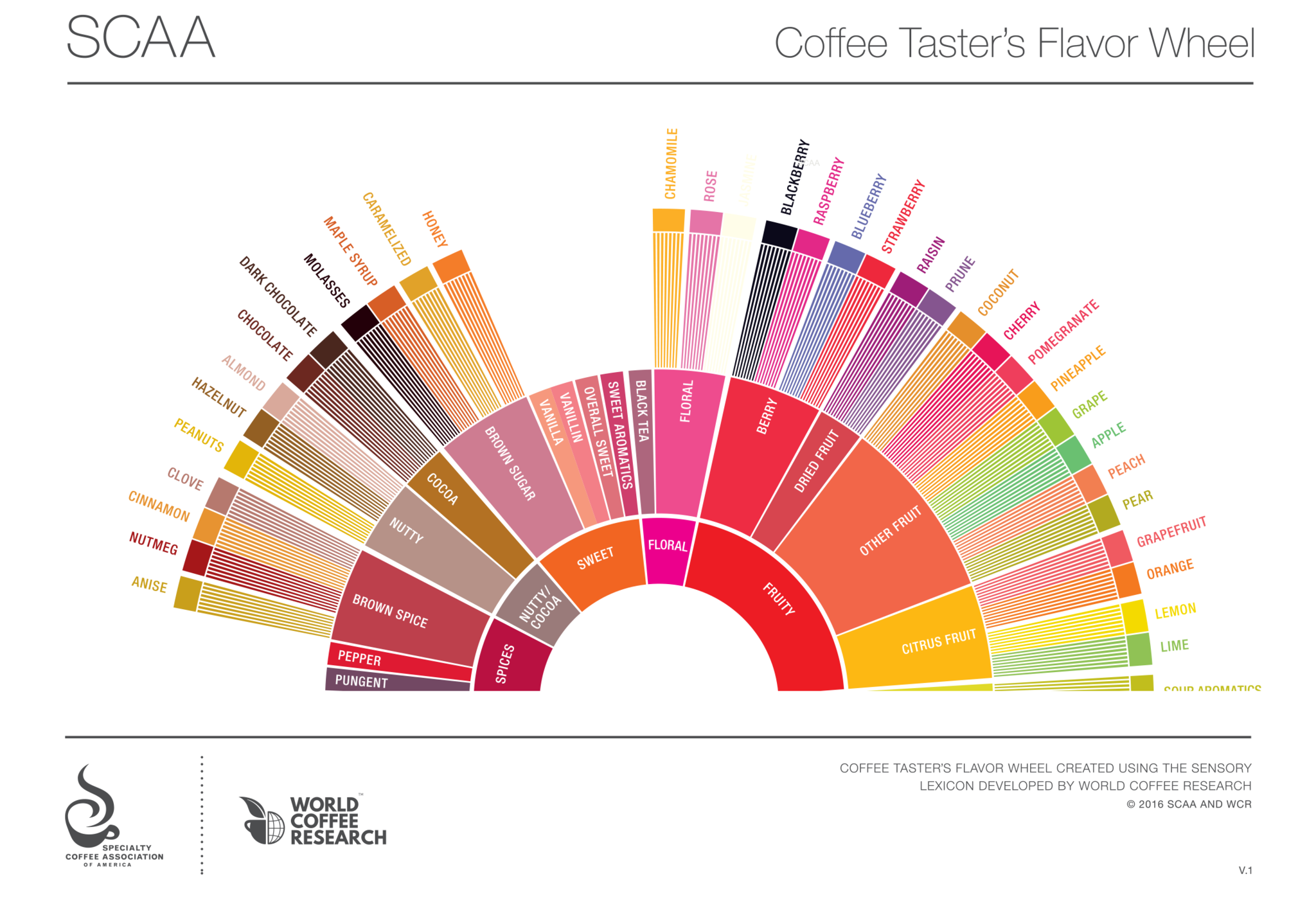 Coffee Taster's Wheel