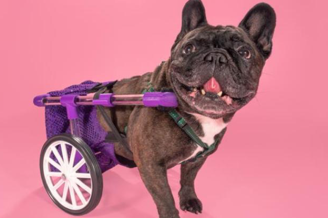 The 3D Printed Adjustable Dog Wheelchair by FiGo