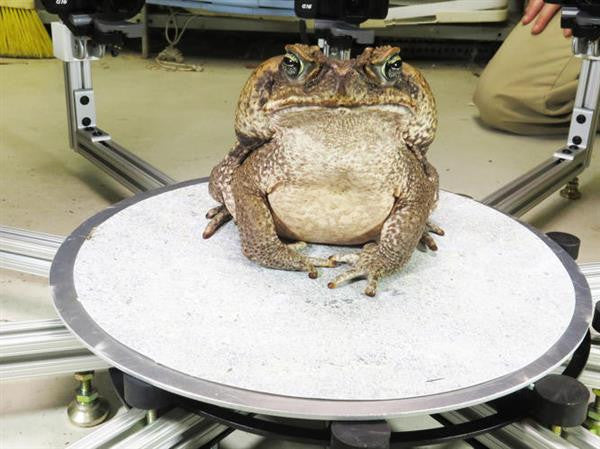 Digital Life: Digitally Preserving Endangered Animals with 3D Scanning