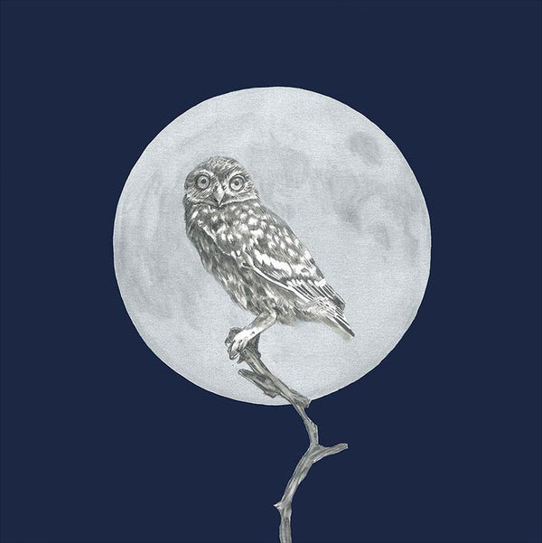 Moon and the Morepork - Melissa Sharplin