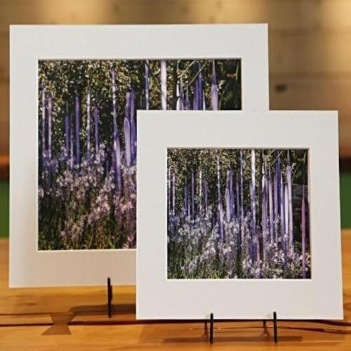 Purple Garden Reeds Matted Photo