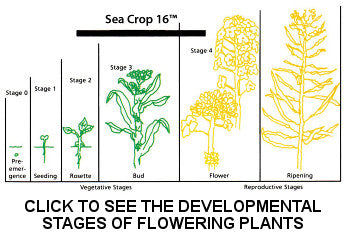 Developmental Stages of Flowering Plants