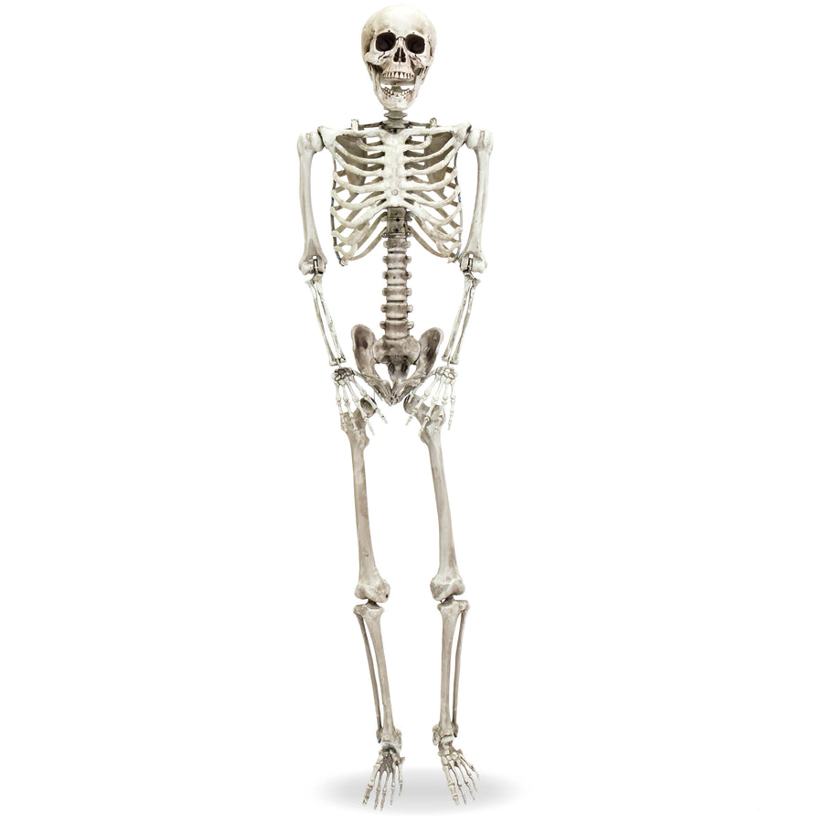5ft Full Body Poseable Skeleton Halloween Decor w/ Movable Joints ...