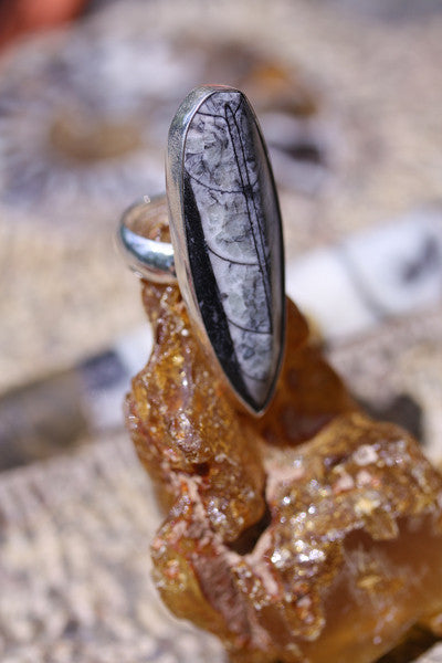Orthoceras Sterling Silver Ring