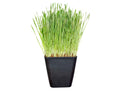 cat grass grow container