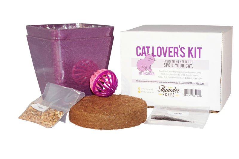 purple cat kit