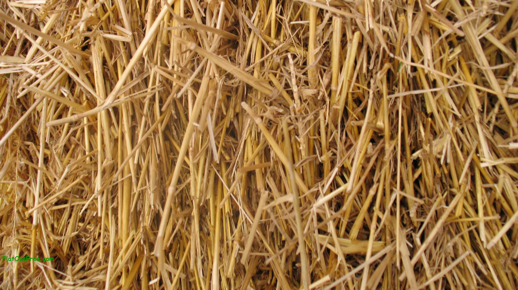 100 natural wheat straw thunder acres