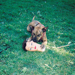 "Joyce Manor ""Cody"" LP"