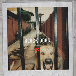 "Boys Night Out ""Black Dogs"" 10"""