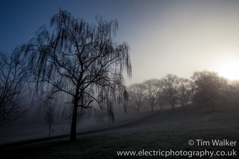 Greenwich Trees in morning mist
