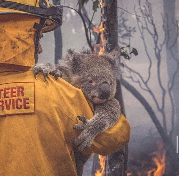 Australian Bush Fire Emergency // We're now a Drop Off Hub