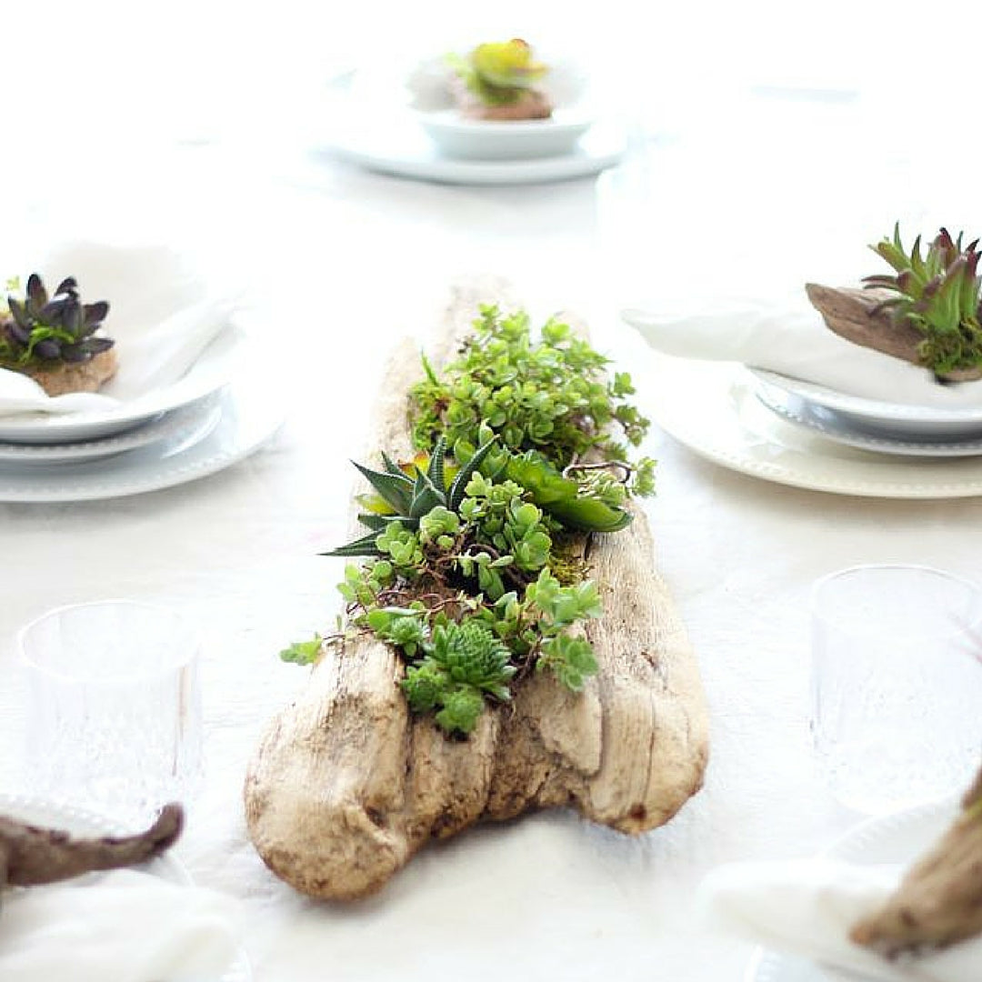 Indoor Plants in driftwood, succulent planter idea