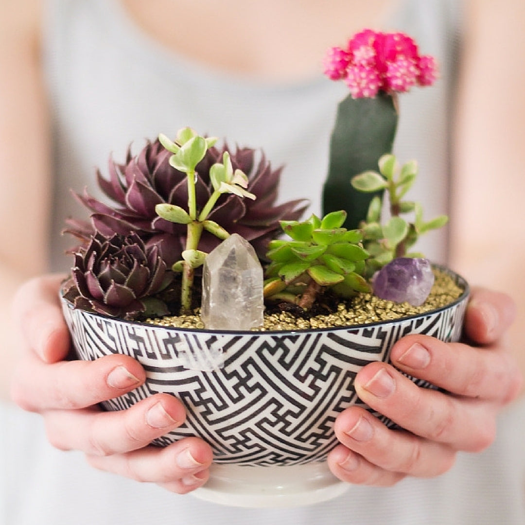 Indoor Plant Succulent Plant in a bowl with crystals