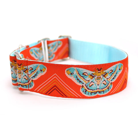 "1.5"" Clarice Starling Orange Dog Collar"