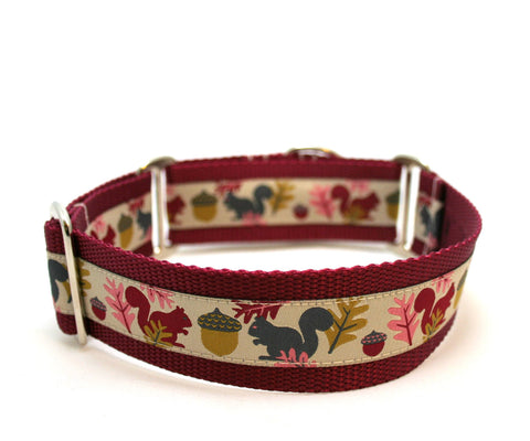 "1.5"" Squirrels are Nuts wide buckle or martingale collar"