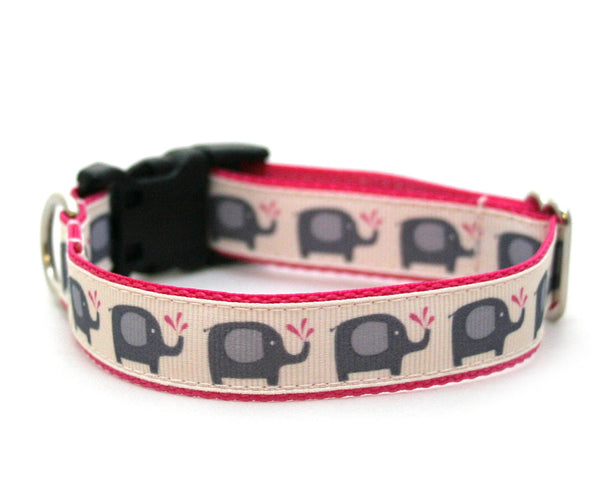 "3/4"" or 1"" dog collar Splish Splash martingale or buckle collar"
