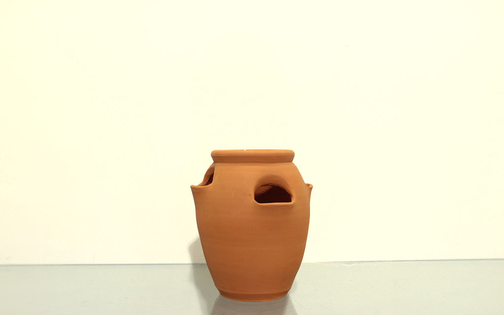End of line Terracotta parsley pot