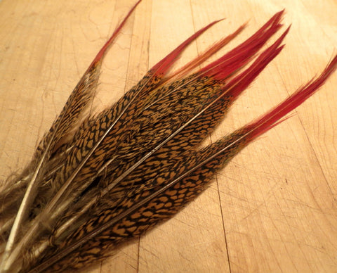 Golden pheasant spears