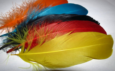 Goose shoulder feathers, dyed