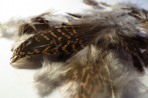 Grouse feathers (loose)