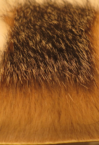 Gray fox body hair