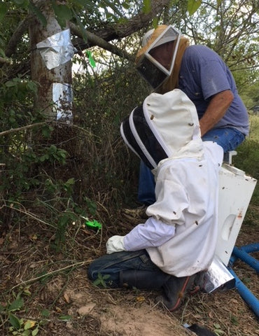 young beekeeper forced abscond