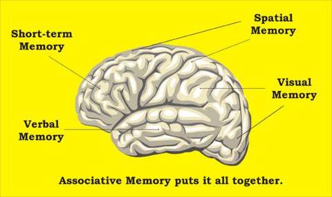 brain and memory functions
