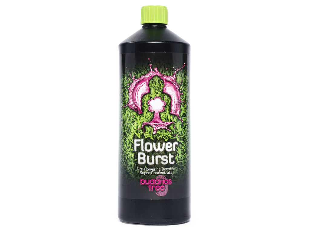 Buddhas Tree Flower Burst 500ml