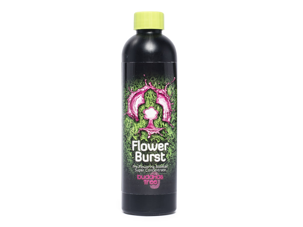 Buddhas Tree Flower Burst 250ml