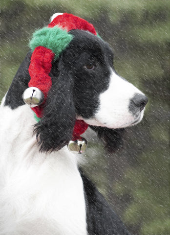 "English Springer Spaniel (Black) - ""Snowy Christmas"" (Design X060)"
