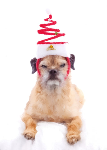 "Border Terrier Christmas - ""Where Are My Cookies?"" (Design X059)"