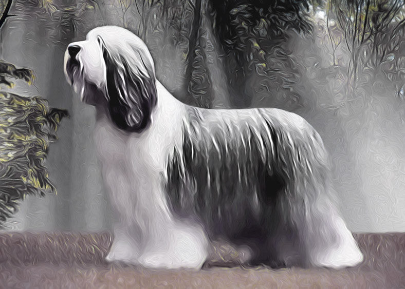 "Bearded Collie - ""Misty Morning"" (Design 094)"