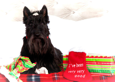 "Scottish Terrier - ""Good... for a Scotty"" (Design X054)"