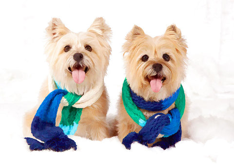 "Cairn Terrier - ""Blue Scarf Duo"" (Design X053)"