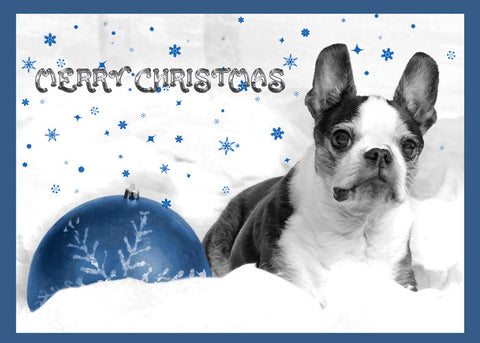 "Boston Terrier - ""Blue Christmas"" (Design X047)"