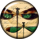 Snap button Domed Dragonfly Interchangable Jewelry  18mm