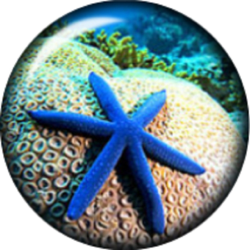 Snap button Beach Starfish  18mm charm chunk interchangeable
