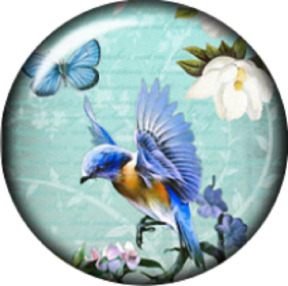 Snap button Hummingird  charm  Jewelry 12mm