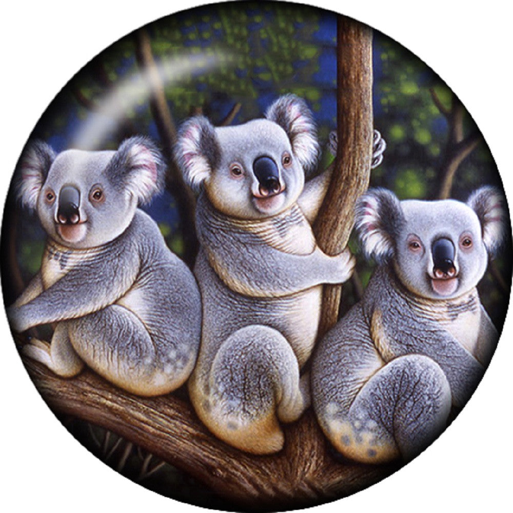 Snap button Kaola bears 18mm Cabochon