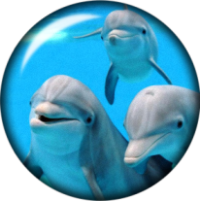 Snap button Dolphins 18mm Cabochon chunk charm