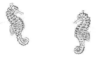STERLING SILVER MINI SEAHORSE EARRINGS ON POSTS [Jewelry]
