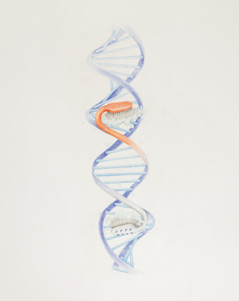 DNA/POSTER, 2015