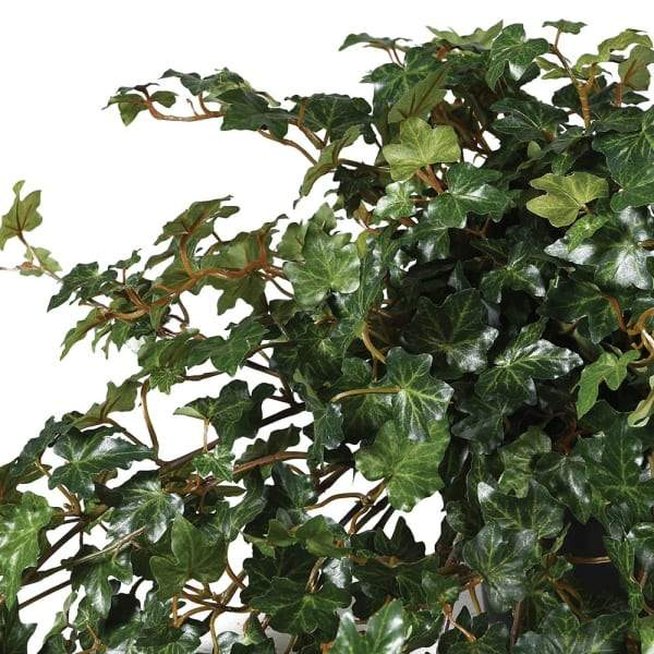 Large Potted Artificial Trailing Lace Ivy