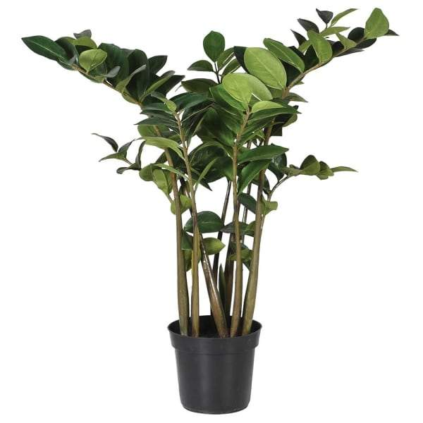 Large Faux Zamioculcus Plant at the Farthing