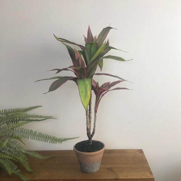 Artificial Potted Cordyline Plant at the Farthing 1